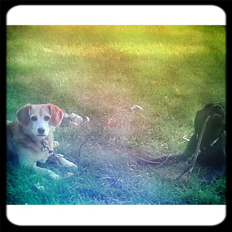 Puppy Love My World <3  Playmates At Play A Dogs Life