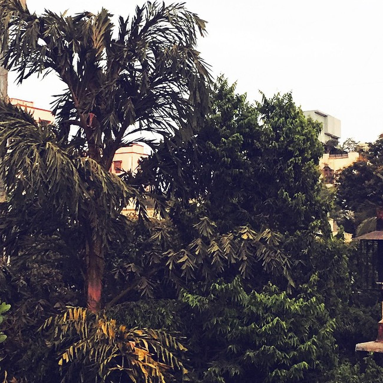 Mausam is getting awesome !!! Gogreen Sexyweather Bigtrees Relief MumbaiWeather Nofilter Instapic