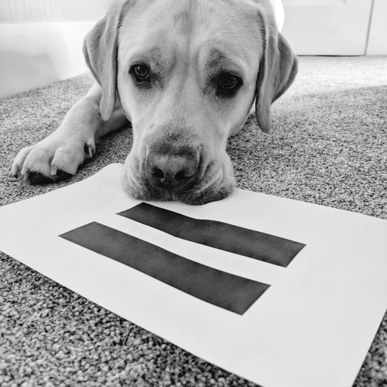 EyeEm Selects Dog Pets One Animal Domestic Animals Animal Indoors  Looking At Camera Animal Themes Mammal Portrait Puppy Day No People Close-up Equality💕 Equalpay Equal Pay Day