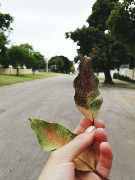 Picking leaves not flowers. Proudly South African ♥ Enjoying Life Home Sweet Home Lené Prinsloo Naturelover Nature Photography Nature Htown Walking Hanging Out Leaves🌿