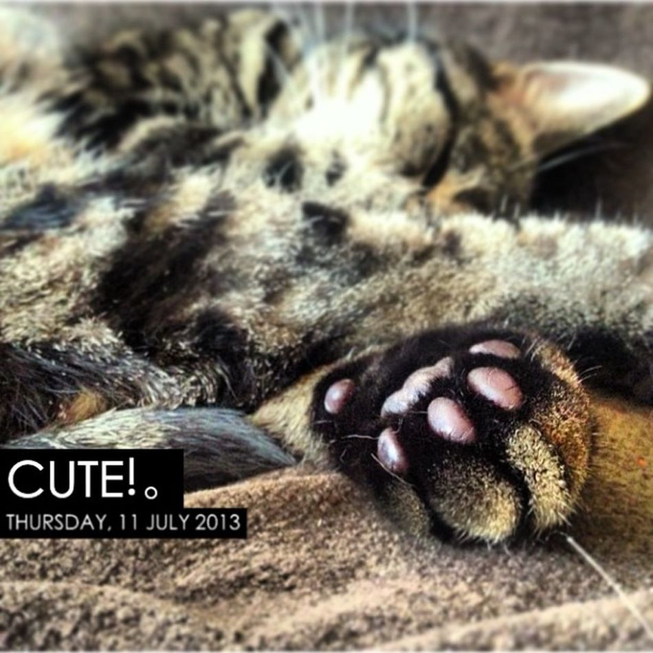 Photooftheday InstaCC Instaccpopd6 Cute Paws Paw Petsofinstagram Petoftheday Petsofig Cats Catsofig Catsofinstagram Tabby Tabbys Tabbysofig Tabbysofinstagram Kitty Grumble Jellys Jellybeans Jellytoes K8marieuk Toes Toesies