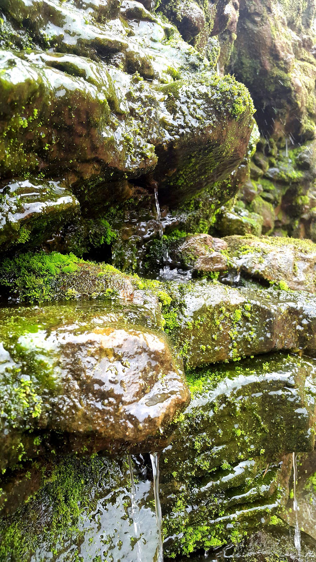 Nature Puerto Iguazu