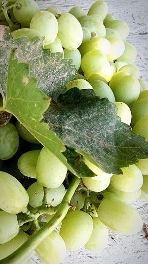 Zinfandel tierras vinicolas Mexicali Baja California
