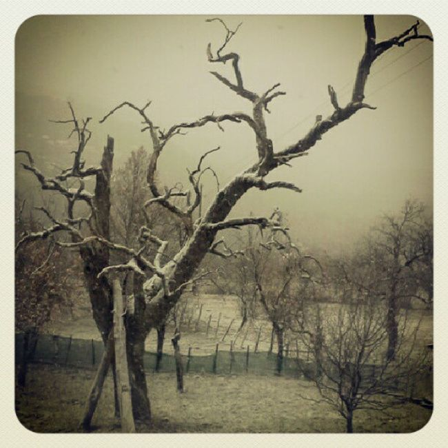 Firstsnow ArtOfNature Roomview Degurickapecina Trees Spooky Trees