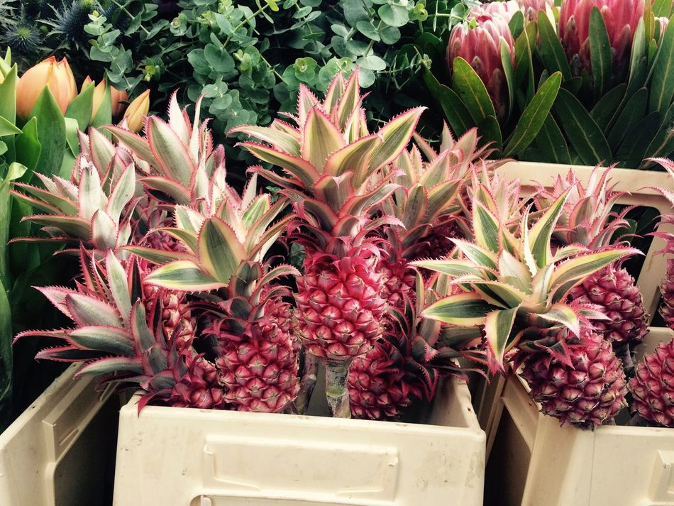 Pink Flower Pineapple Flowerday Columbiaroad London Funky Lovely Excotic PrettyInPink Fruty Pmg_lon