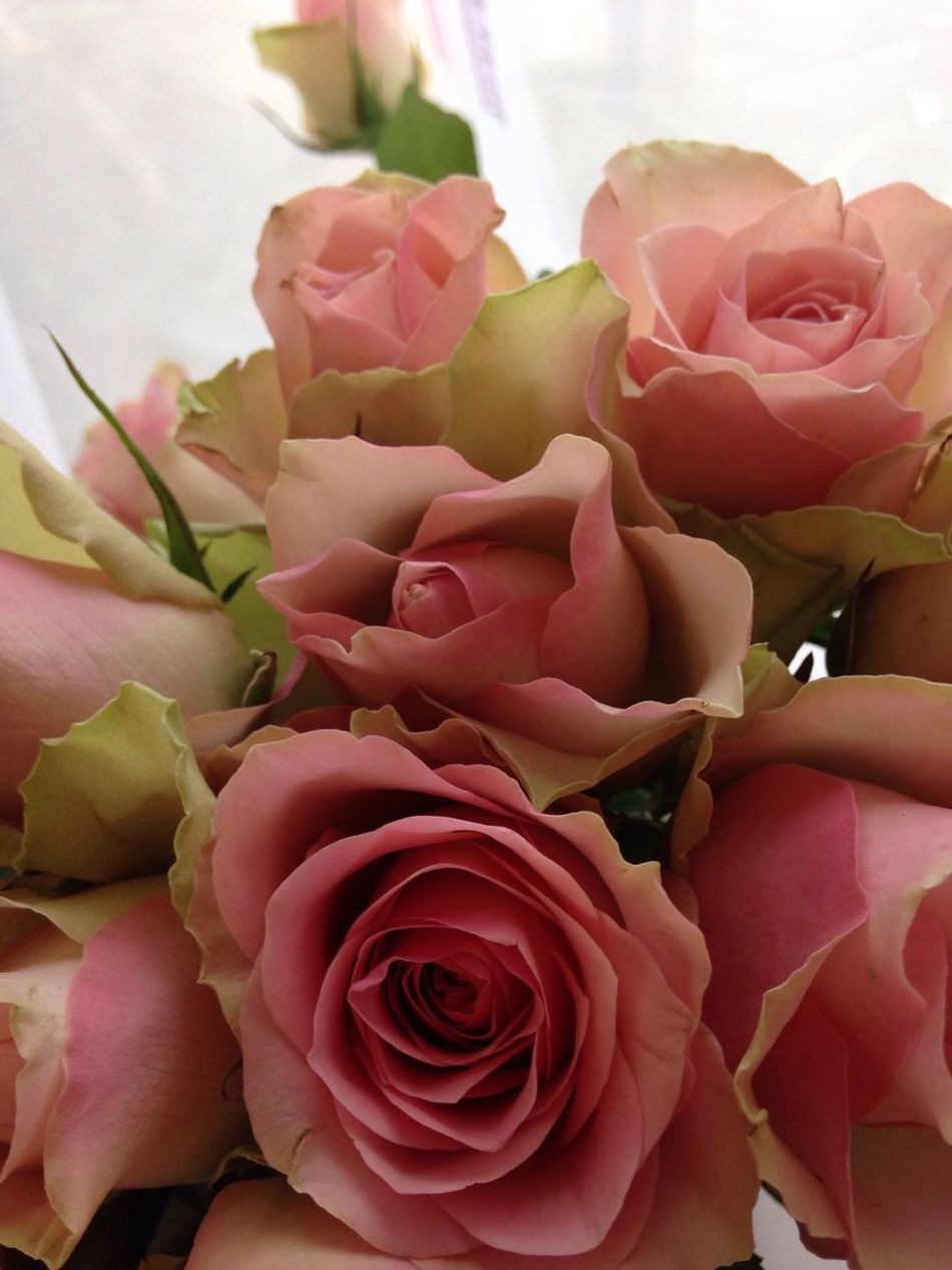 Roses Romantic Romance Pink Roses Fragility Flowers Flower Collection Flower Rose - Flower Petal Nature Beauty In Nature Freshness Flower Head Bouquet Growth No People Close-up Pink Color Plant Indoors  Day
