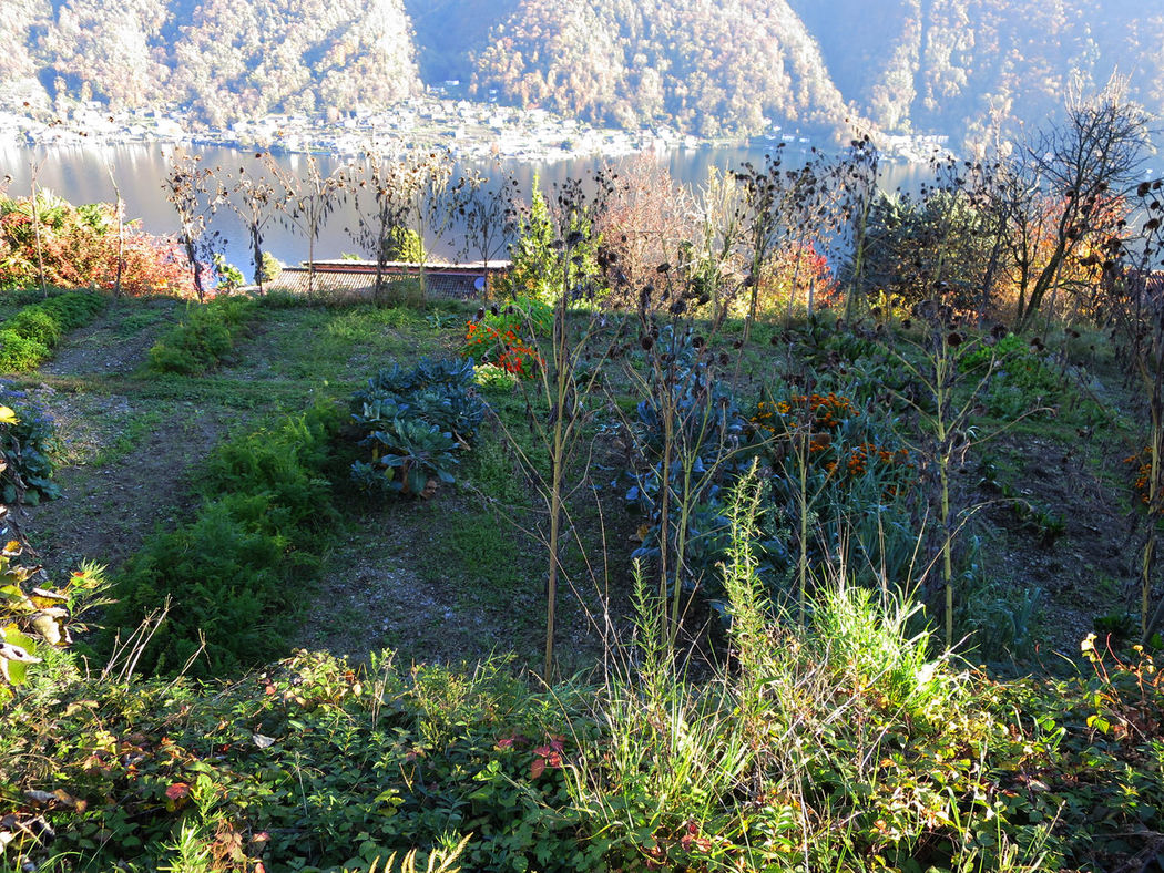 Autumn Autumn Colors Change Flowers Garden Growing Growth Lake Lakelugano Lakeview Remote Tranquil Scene Wild