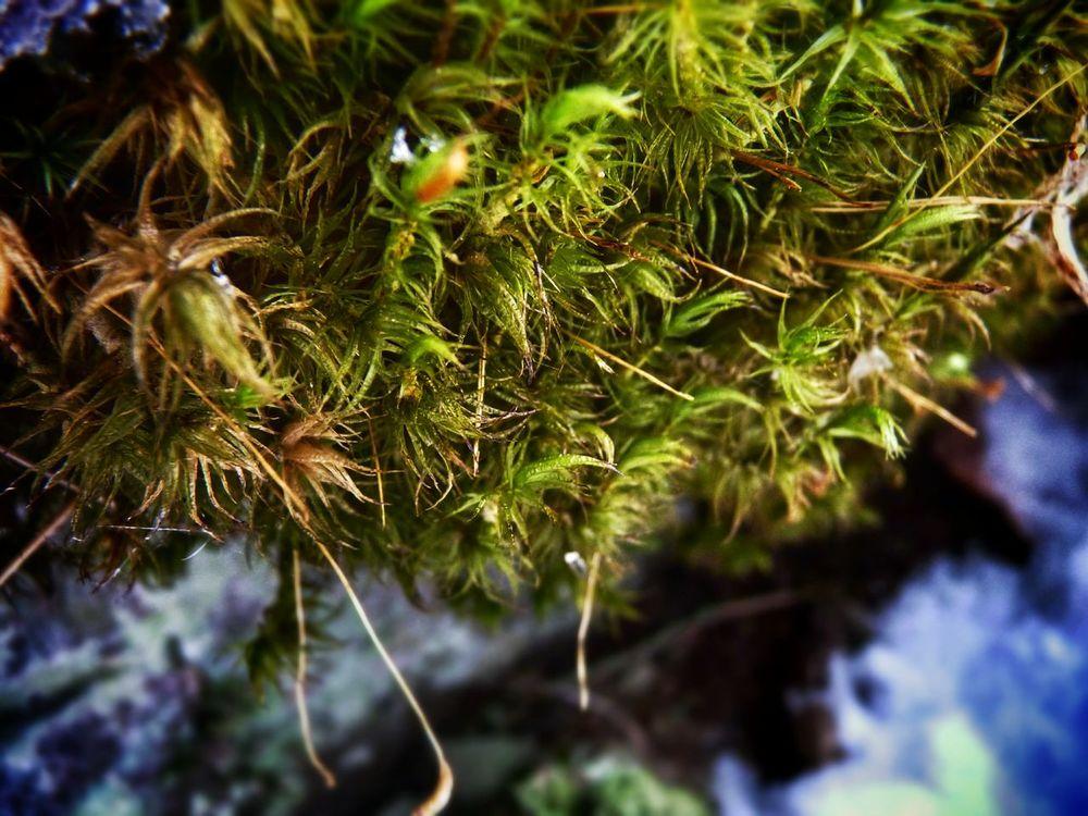 Mossporn Macro World Moss & Lichen Macro_collection