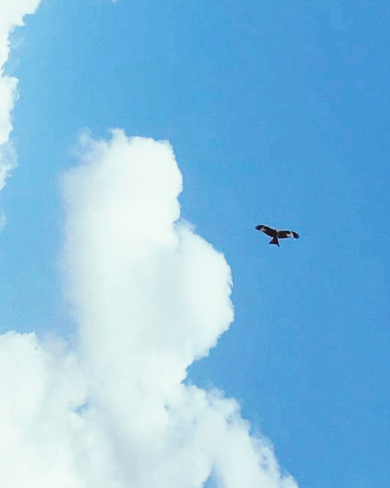 Flying Mid-air Day Sky Blue Low Angle View Outdoors Bird Nature Animals In The Wild No People Airplane Airshow Aerobatics