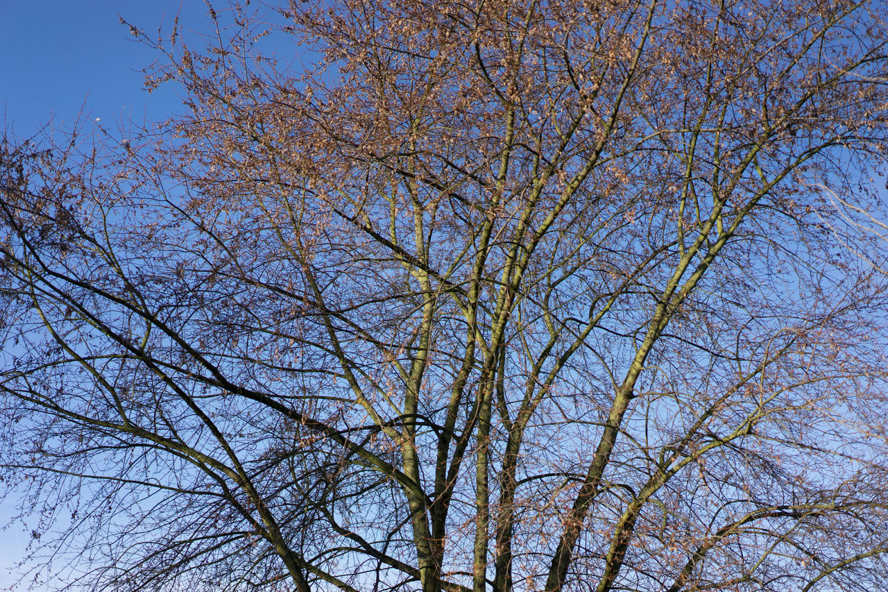 Bare trees in winter sunlight Beauty In Nature Branch Day Growth Low Angle View Nature No People Outdoors Sky Tree