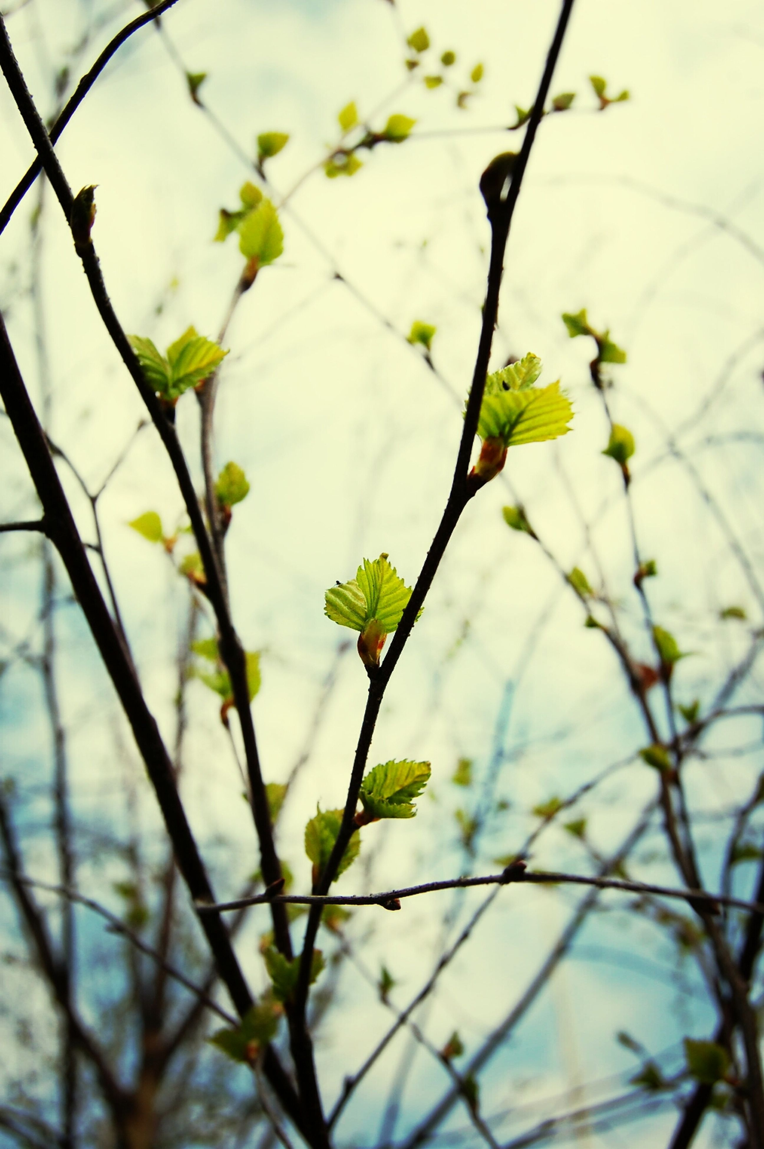 branch, low angle view, tree, growth, twig, focus on foreground, nature, close-up, beauty in nature, leaf, freshness, flower, selective focus, outdoors, day, fragility, sky, no people, clear sky, blossom