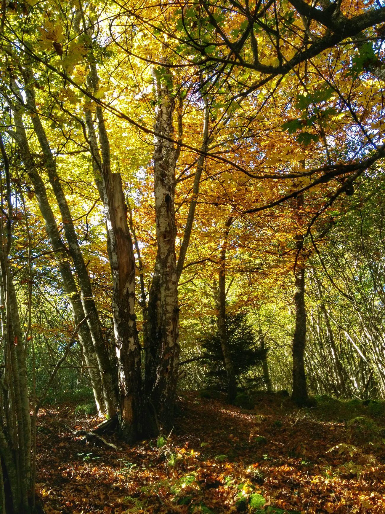 Les couleurs de l'automne. Automne