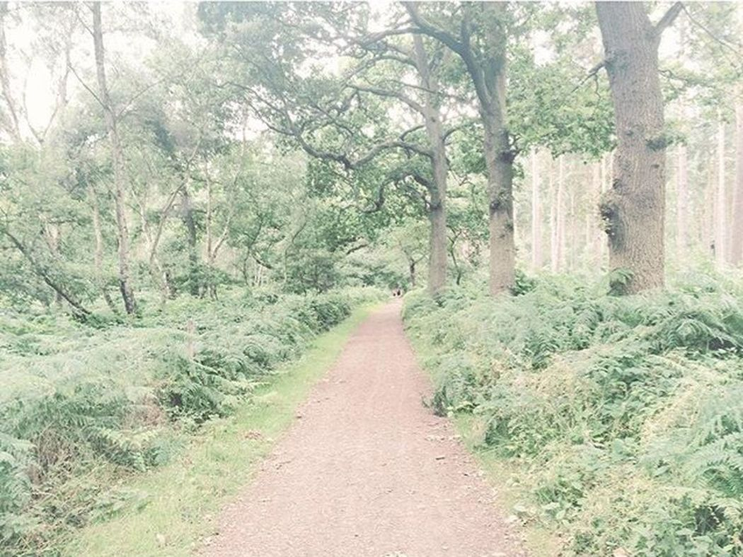 Walk way🙈 The Way Forward Tree Tranquil Scene Tranquility Forest Tree Trunk Long Growth Nature Footpath Narrow Plant Pathway Non-urban Scene Beauty In Nature Scenics Walkway Solitude Branch Greenery
