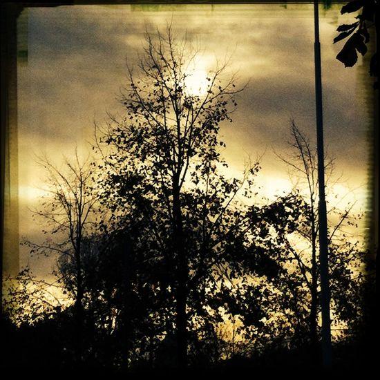 Zie de zon schijnt door de bomen.......... Nature Clouds And Sky Renkum The World Around Me