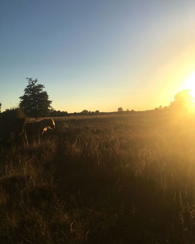 Sunset Tranquil Scene Scenics Tranquility Beauty In Nature Field Sun Landscape Grass Plant Sky Remote Growth Majestic Outdoors Non-urban Scene No People Uncultivated Rural Scene