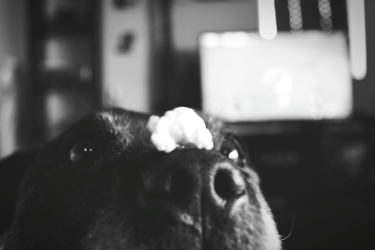 She loves her popcorn Black And White Check This Out Monochrome Collection Staffordshire Bull Terrier Up Close And Personal Dogs Of EyeEm Popcorn🌽👌 Hungry Dog Well Trained Discipline And Balance Make Everything Possible Movie And Popcorn Patience Is Virtue