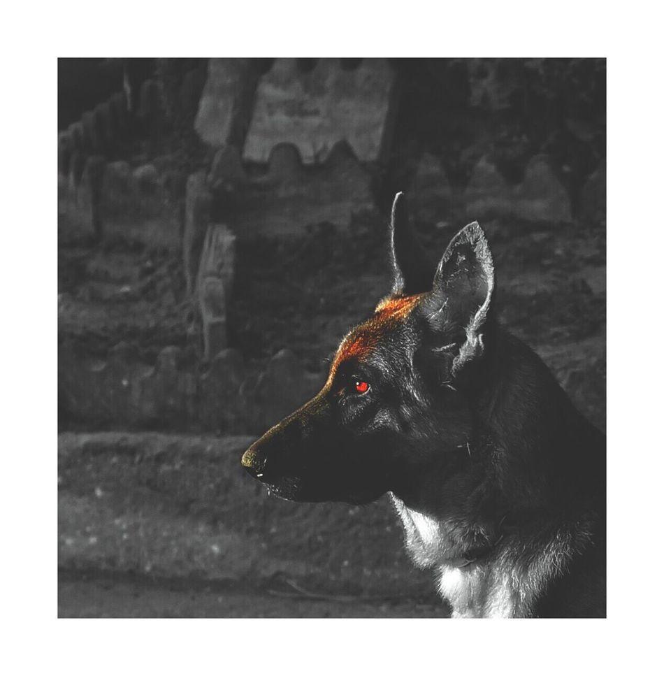 Thank you for 10! Dog Karachi Frame It! EyeEmNewHere EyeEm Gallery EyeEm Best Edits Eyeemphotography EyeEm Best Shots EyeEmBestPics Eye4photography  EyeEm Blackandwhite