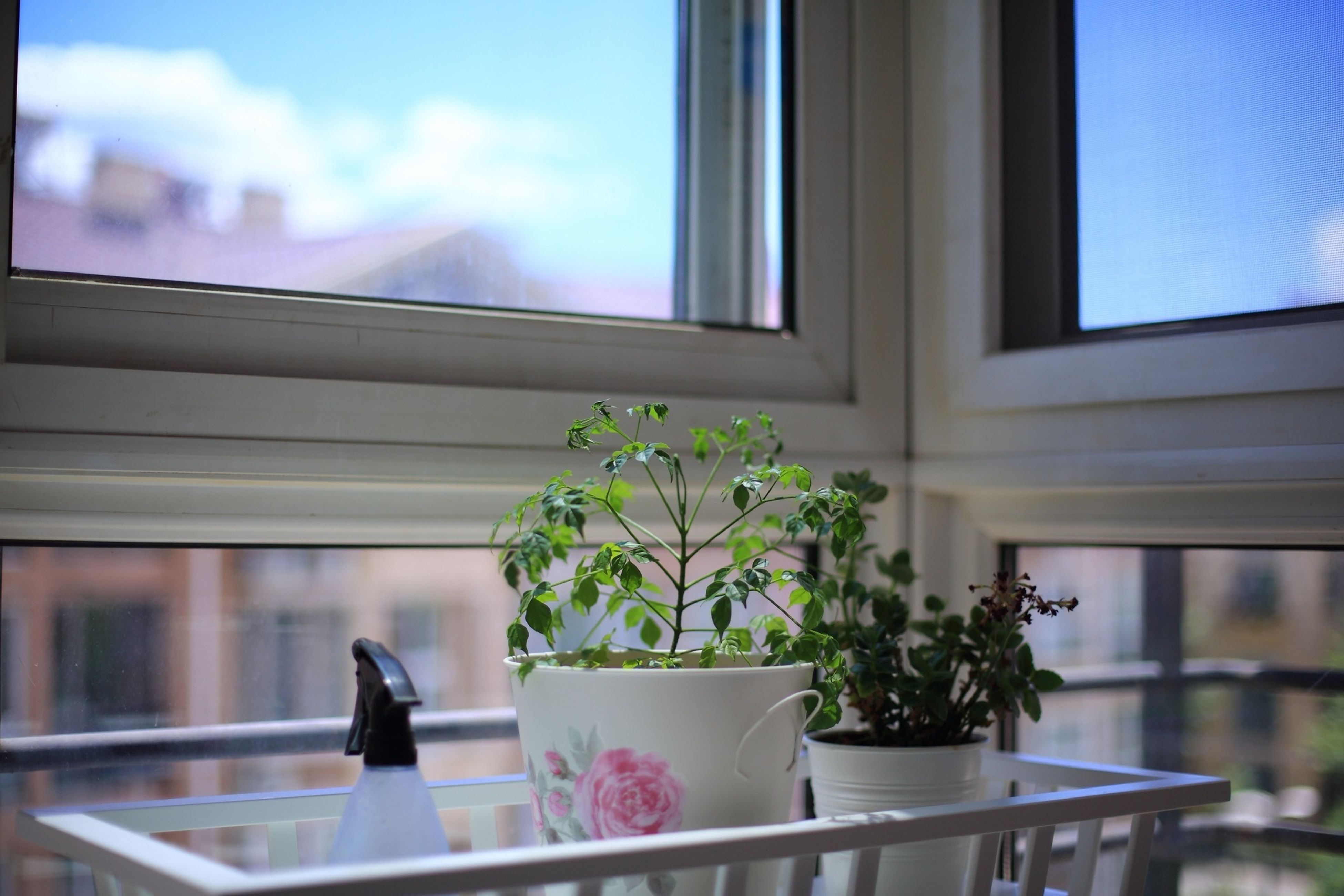 window, window sill, indoors, glass - material, potted plant, flower, transparent, architecture, built structure, sky, plant, building exterior, home interior, balcony, house, glass, curtain, animal themes, day, one animal