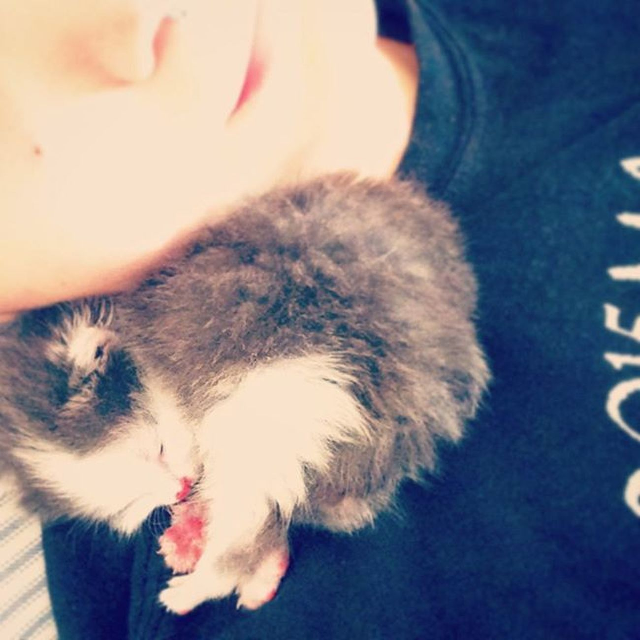 The only boy I need. Kitten Newborn 3weeksold Yup Sleeping Cute Cuddles Hescute Bean Beaner Longhairedcat
