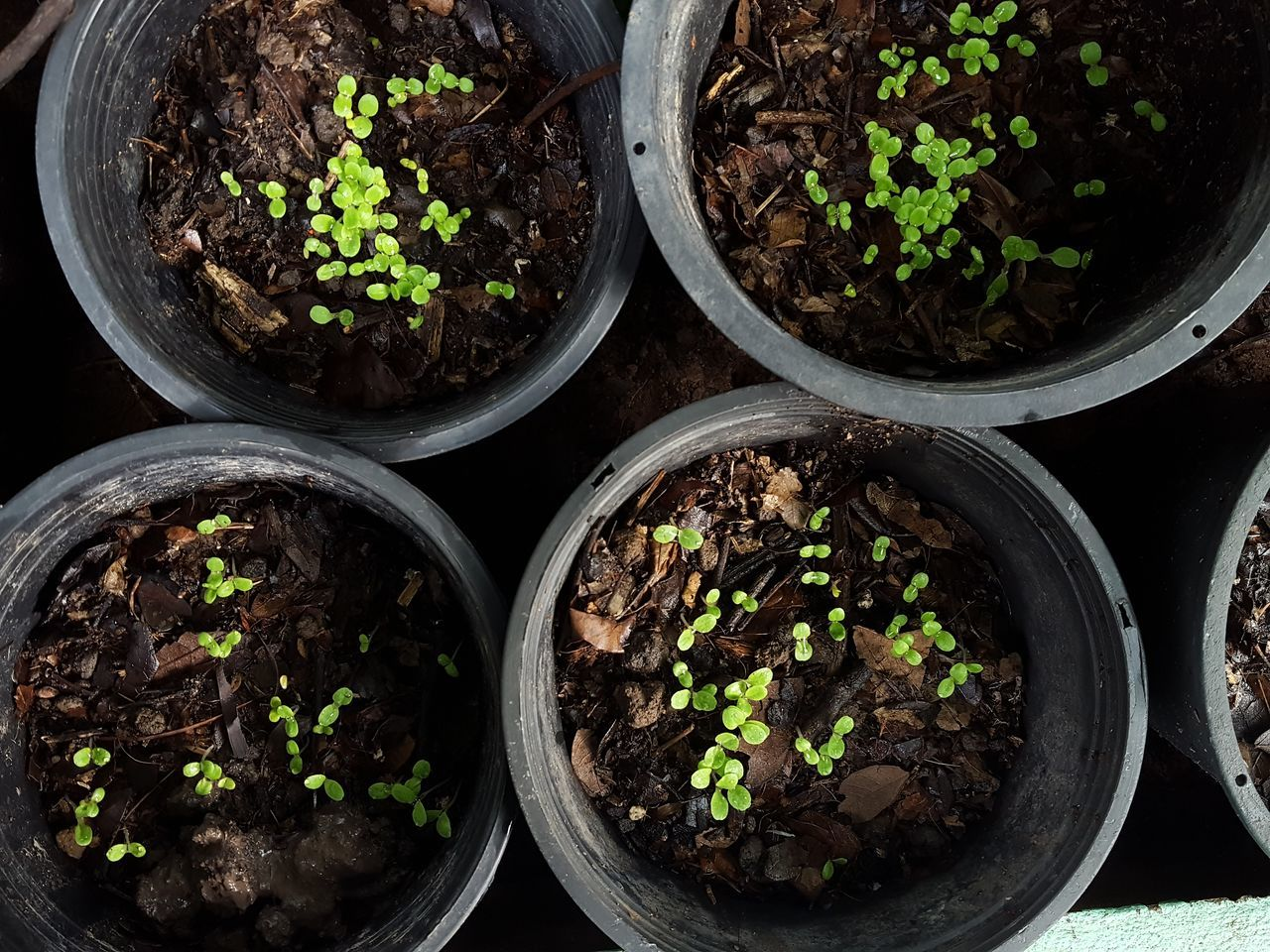 growth, potted plant, plant, green color, sapling, nature, no people, planting, close-up, fragility, day, indoors, greenhouse