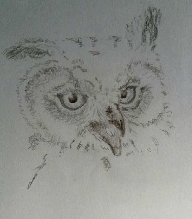 Sketch Drawing Owl Sketch Sketchbook Animal Art Nature GraphitePencil