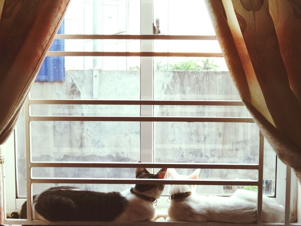 This Is How My Cat Looks Like Everyday Window Cats Cats Lovers  Pets Animal Themes Looking Cat Sunset Cat Pet Portraits
