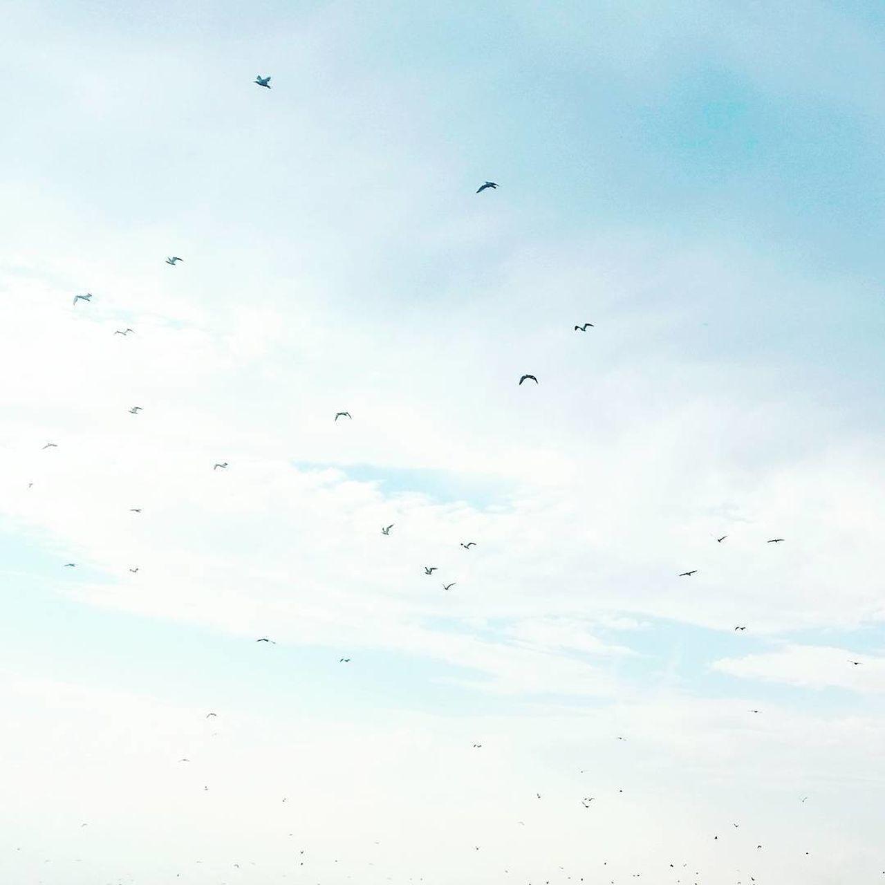 Bird Birds Day Flock Of Birds Flying Migrating Nature No People Outdoors Sky Spread Wings