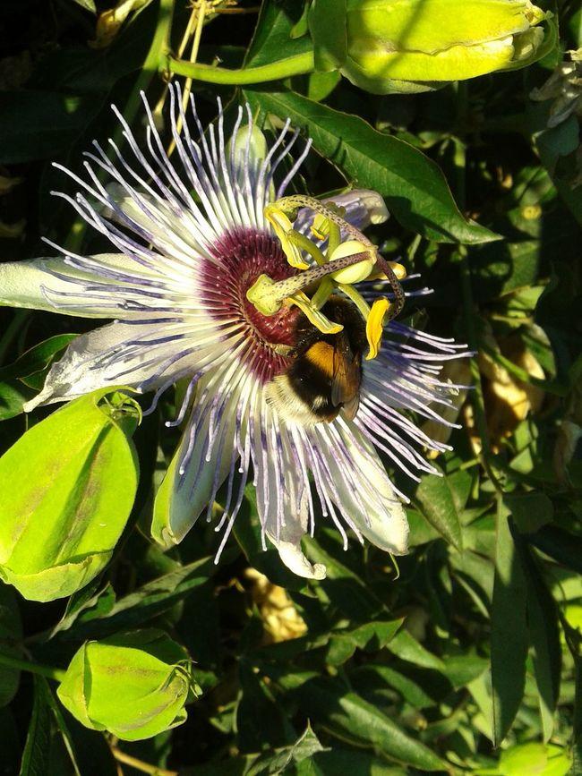 Throw back summer Nature Flowers Animals Passiflora