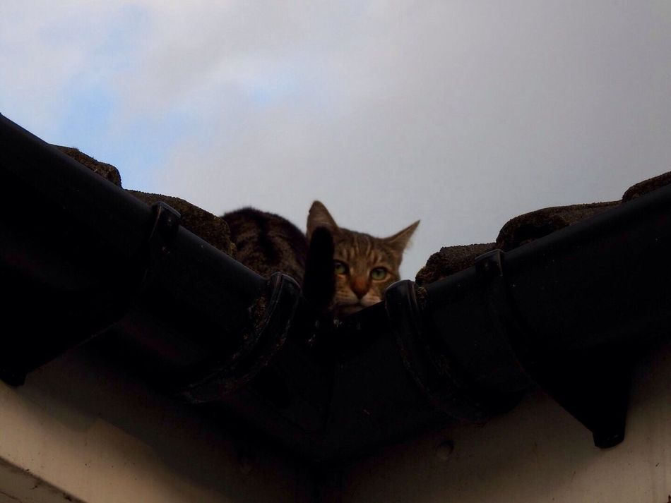 Cat Rooftop One Animal Pets Domestic Cat Feline Domestic Animals Animal Themes Outdoors No People Mammal crouching