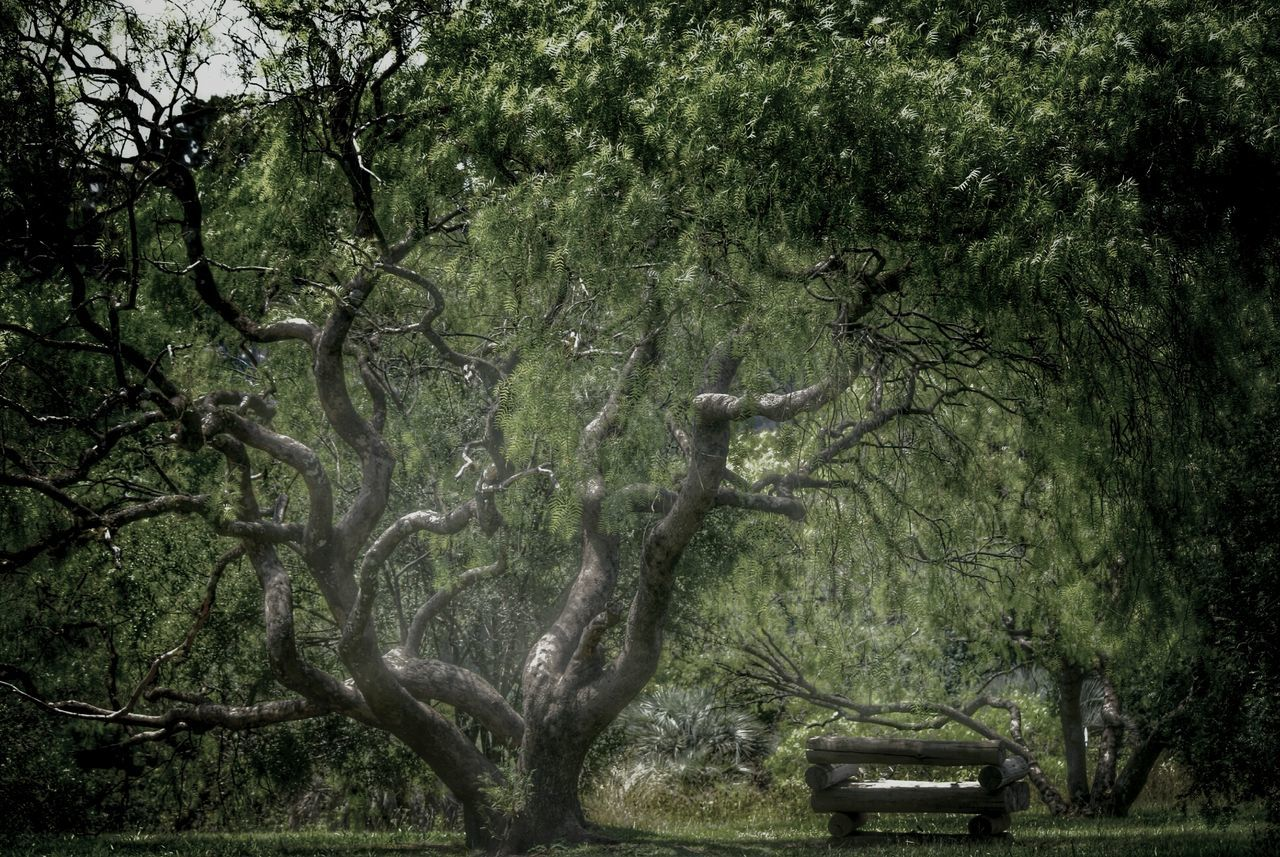 Empty Park Bench Under Tree