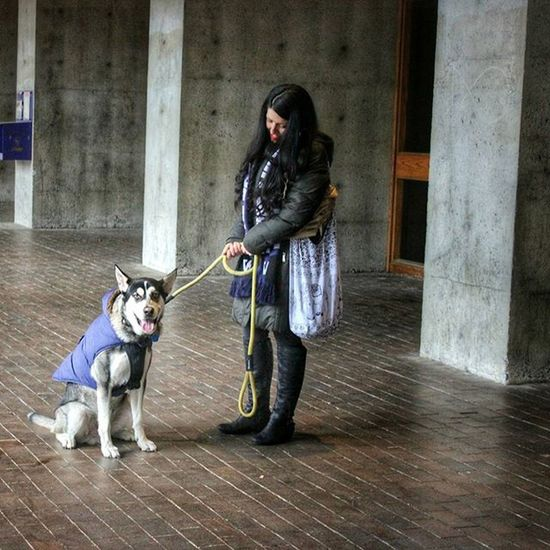 Last post for the night. Had a great time meeting new people at the Igers_seattle Instameet @uofwa today! Gohuskies PNW Photography Seattle UW Husky Dog Dogsofinstagram University Mascot King5spring King5 Springupseattle
