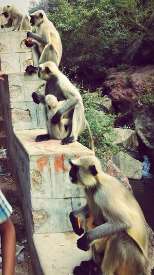 Everything In Its Place monkeys too#manners# Enjoying Life