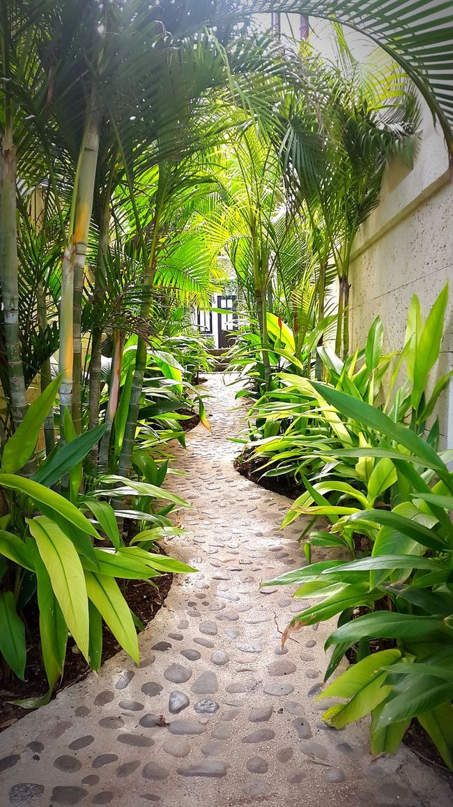 Hidden passageways, lush and mysterious. Can't get enough of this place. Lifestyle Costa Rica Wonderful_places Travelwithme Hidden Passageway