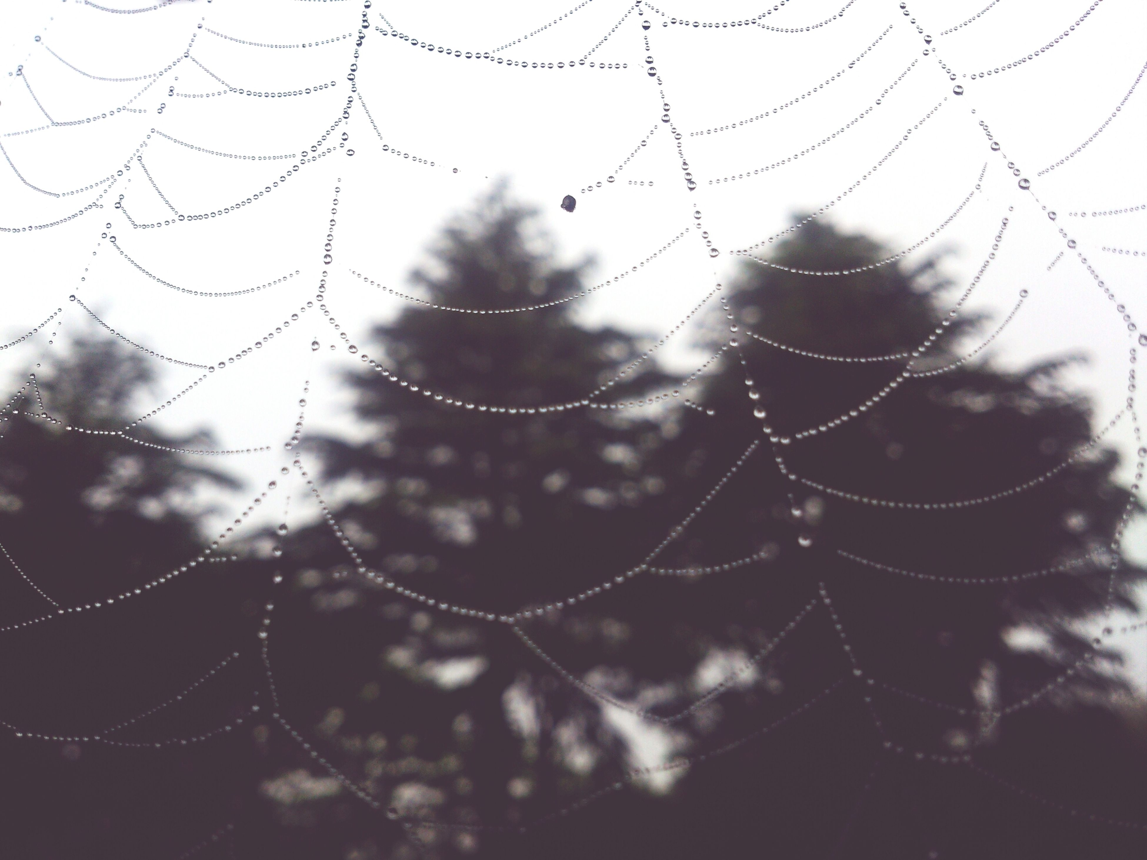 drop, water, wet, spider web, focus on foreground, close-up, fragility, rain, weather, dew, raindrop, nature, season, beauty in nature, natural pattern, purity, water drop, droplet, day, outdoors