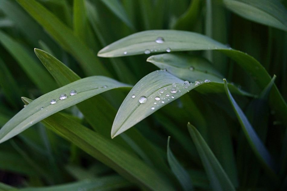 Grass Rain Raindrops Waterdrops Close-up Nikonphotography Macro_collection EyeEm Nature Lover Eye4photography  EyeEm Best Shots Decorative Grass Walk After The Rain Easter Ready