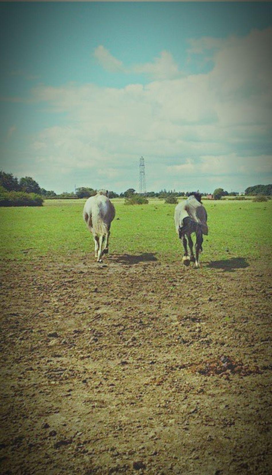 More Horses Trottinghorse Trotting Sky In Unison Fields Land