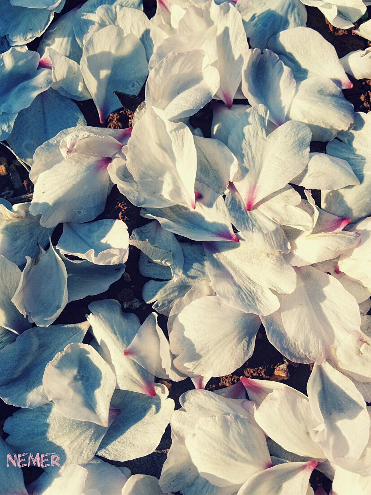 Falling Flower Flower Paper Sunset Nature White Flower First Eyeem Photo
