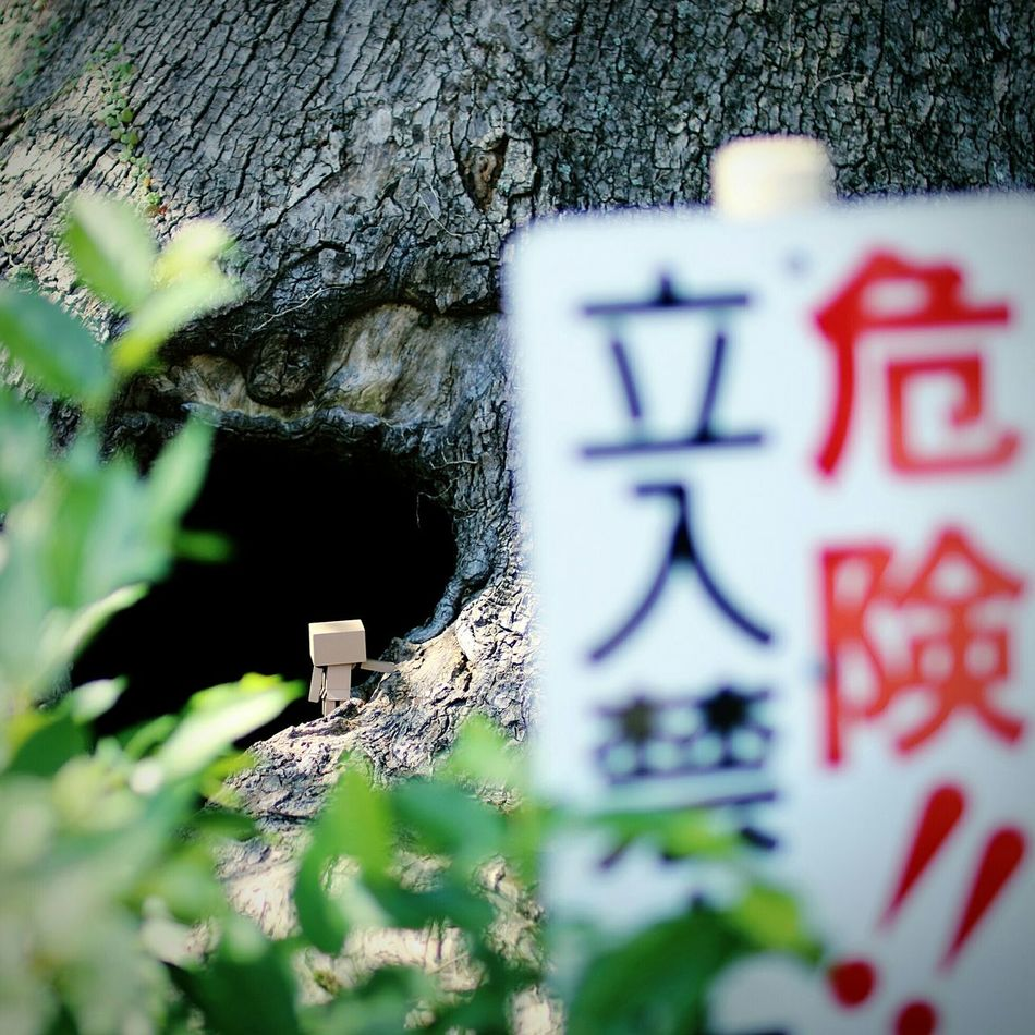 Danger!! Danbo Keep Out EyeEm Gallery Tree Signboard Cheese! Japanese Shrine Shallow Focus
