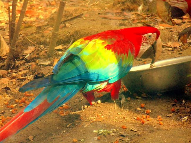 Parrot Lover Colors Colorsplash Animals Birds_collection Eye Catching Coolpics Nature_collection Beatuiful