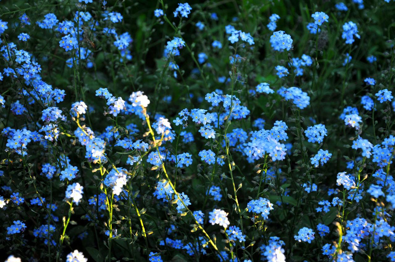 Bluebells Flowers Forget Me Not Landscape Nature Sunlight Warm WoodLand