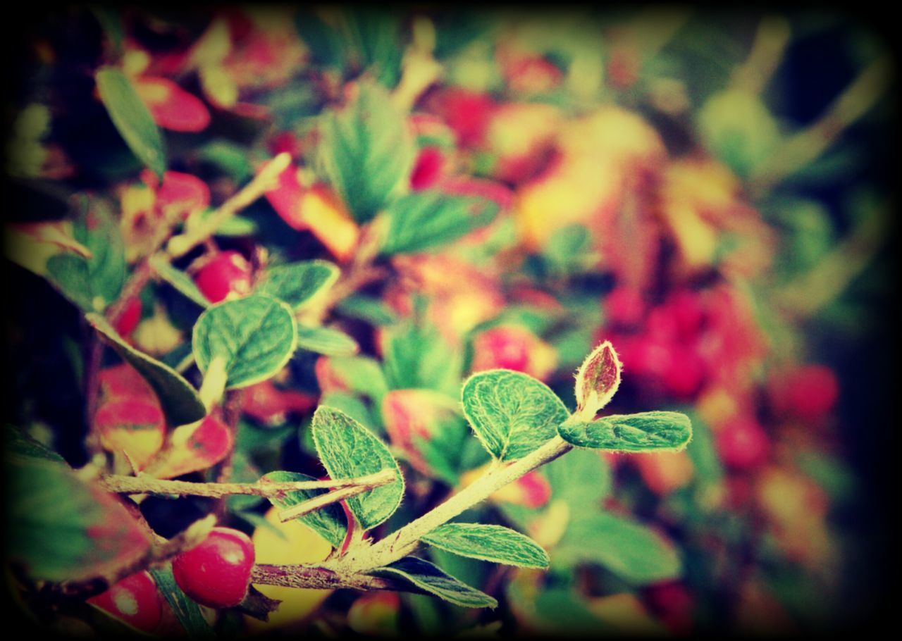 Sheets🍃 Berrys Red Color Nature Outdoor Photography No People