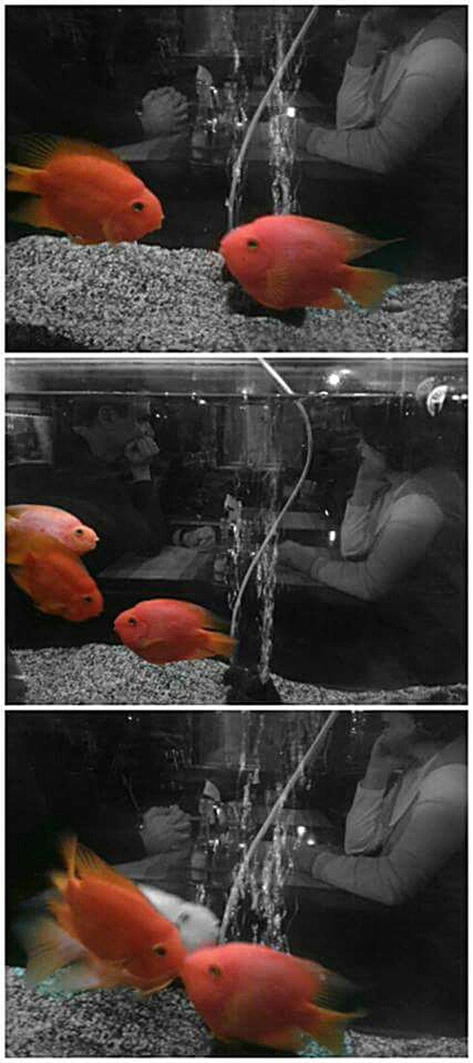 My Hobby Love ♥ Golden Fish Humans And Animals Found Nemo