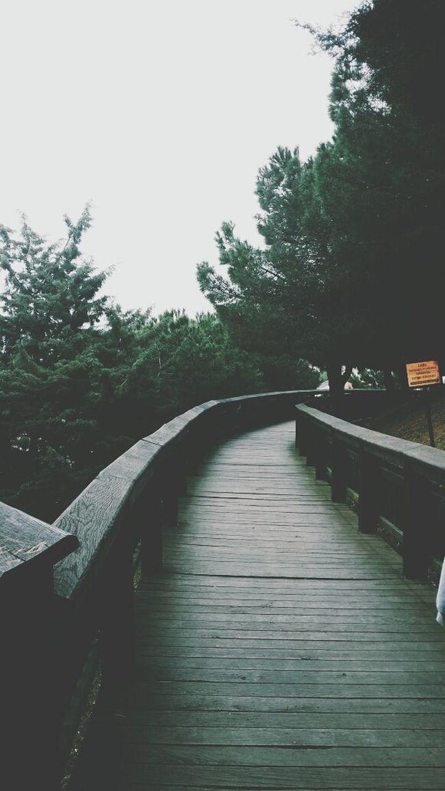 Grunge VSCO Woodenroad Nature
