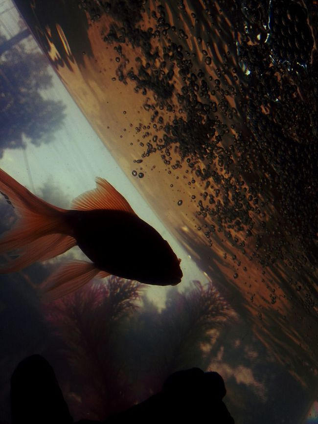 Fine Art Photography The Colour Of Life Life's Simple Pleasures... Photography Is My Escape From Reality! Fish World My Collection... Life Is A Journey Unknown Journey Good Night To My Eyeem Friends To My Friends That Connect Goldfish Fish Tank Loneliness My World My Alone Time
