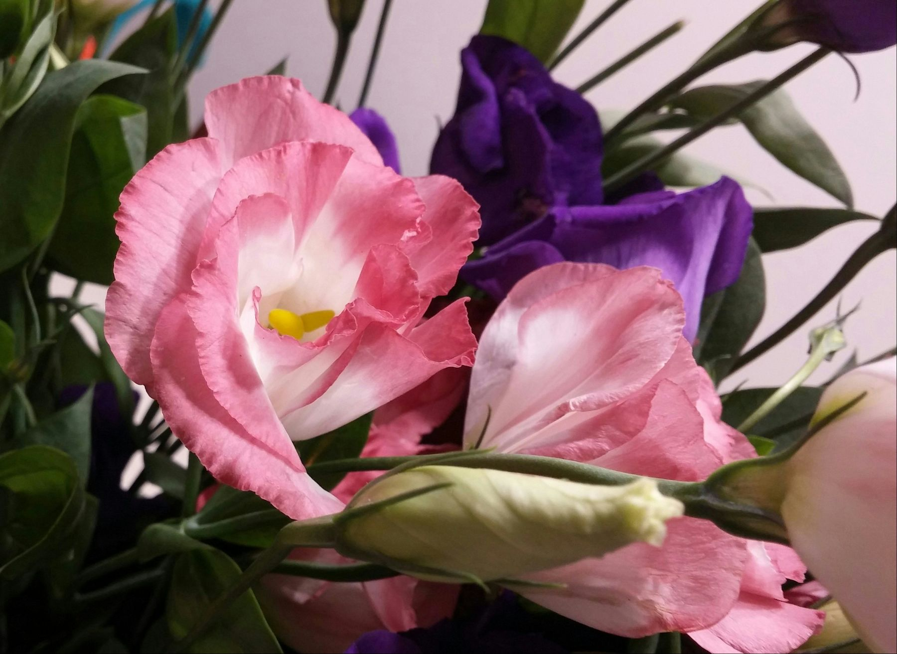 True colors. Happy Sunday my friends. Due to my belated summer vacation im so very late with my reply to you, hope to catch up soon 🙏🍂🌸🍂 Flower For The Friends Lisianthus Eustoma Pink Purple Flowers Make Me Smile!😜