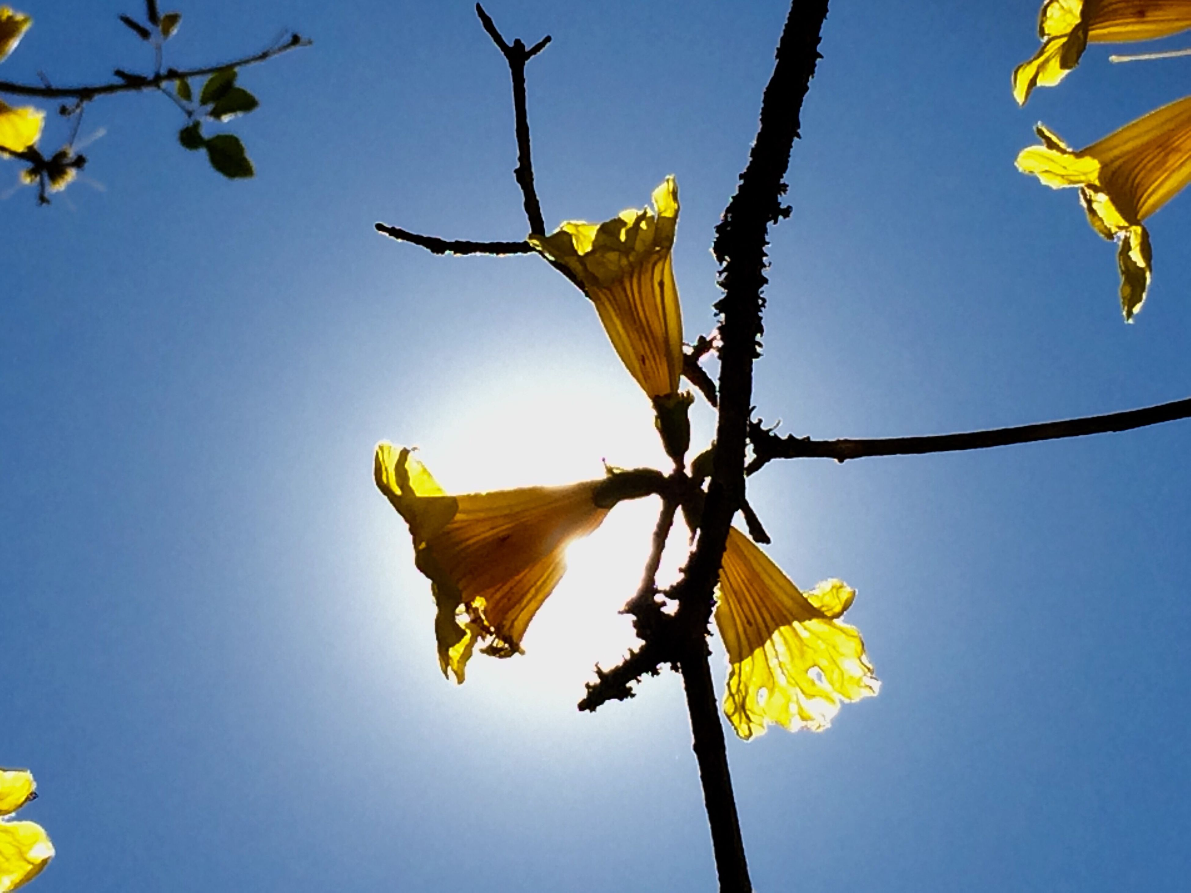 low angle view, yellow, tree, clear sky, sky, no people, branch, nature, growth, beauty in nature, outdoors, day, fragility