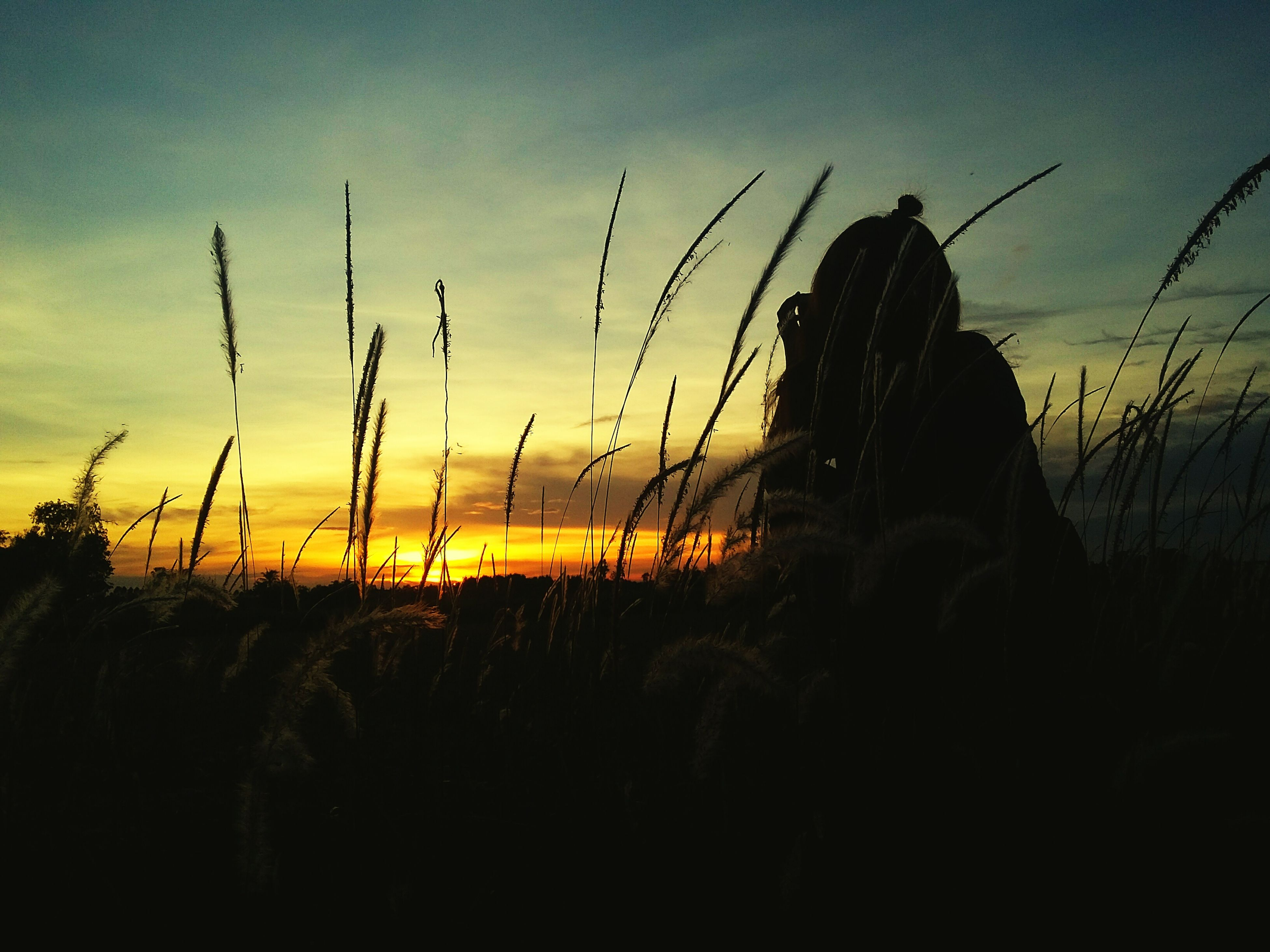 sunset, silhouette, sky, plant, field, nature, beauty in nature, tranquility, tranquil scene, scenics, growth, landscape, sun, orange color, outline, outdoors, idyllic, sunlight, dusk, rural scene
