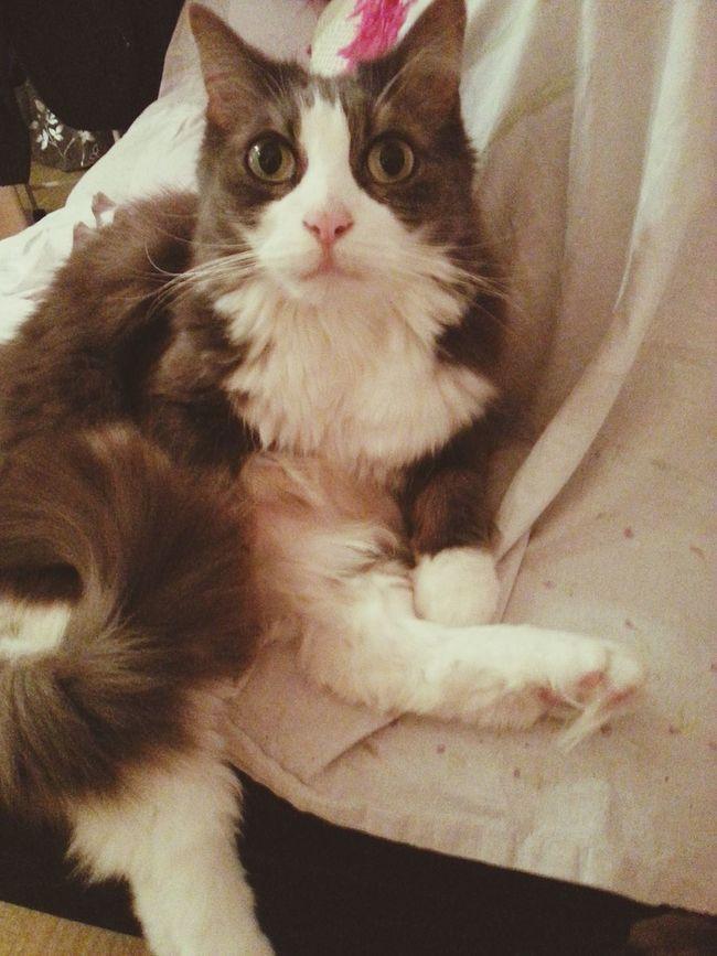 Cute Pets Cat Hi! La toilette du matin
