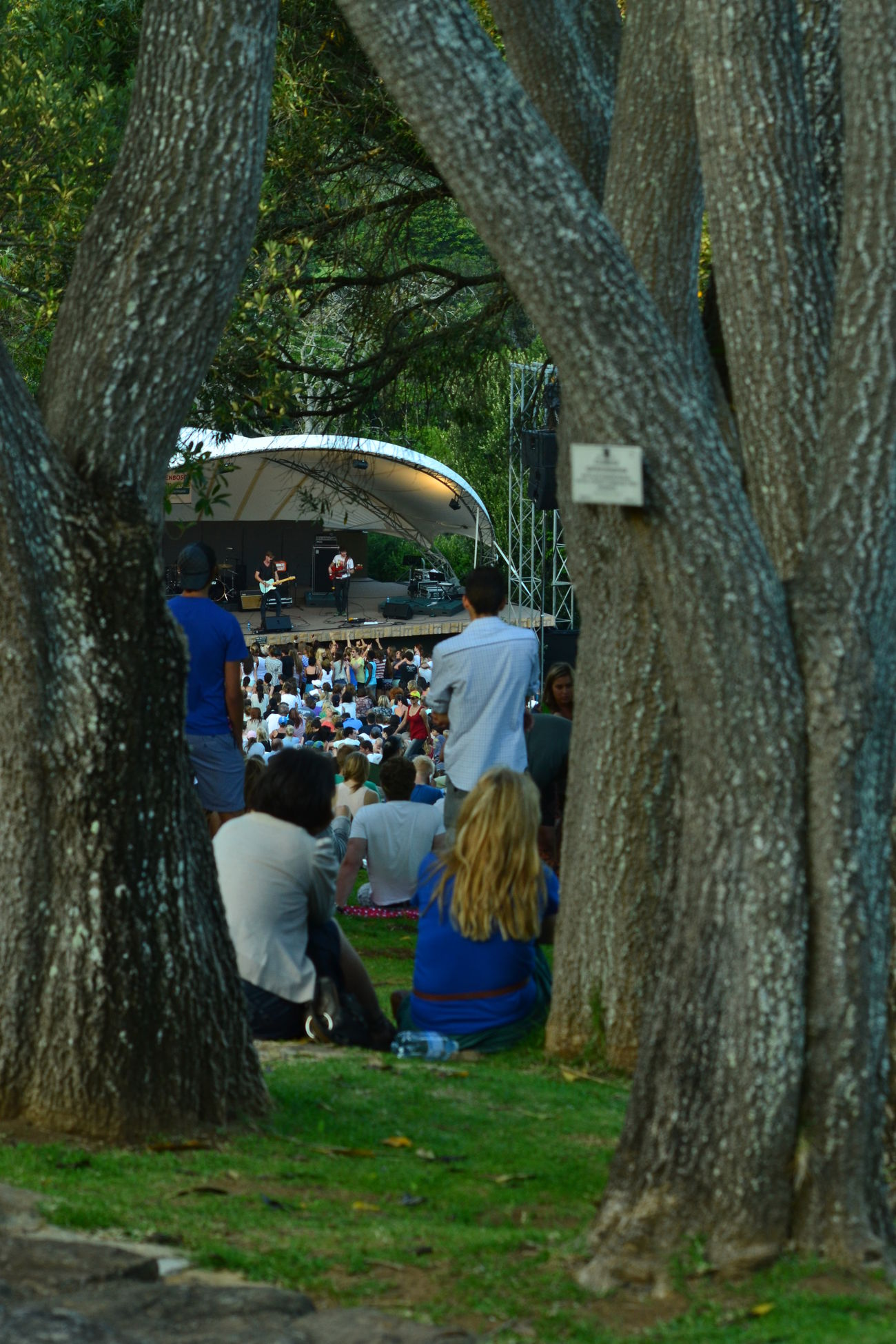 Cape Town City Life Concert Kirstenbosch Leisure Activity Lifestyles Tree Tree Trunk