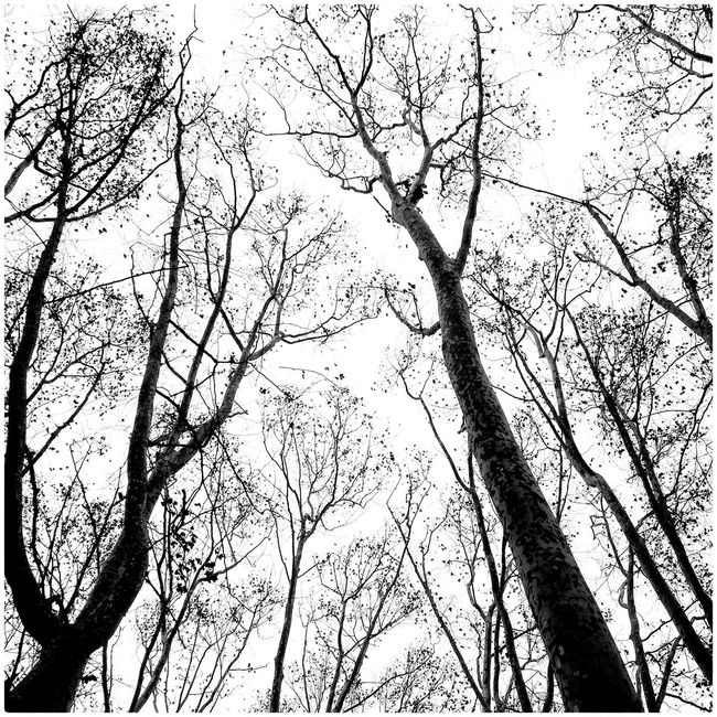 IPhone4s Trees SPAIN Domfernandez Catalonia Catalunya Ruralphotography Barcelona Mollet Blackandwhite Monochrome Gallecs Nature_collection Nature B&w